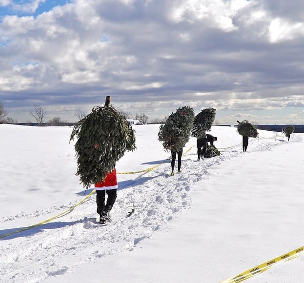 """Runners have to carry Christmas trees as apart of one of the many obstacles in the Blizzard Blast 5K. Runners race in the Blizzard Blast 5K in Dracut on Sunday morning at the Four Oaks Country Club. SUN/Caley McGuane"""